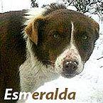 Junghündin Esmeralda