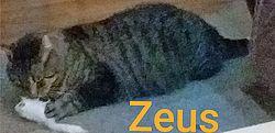 Pflegekatze Zeus