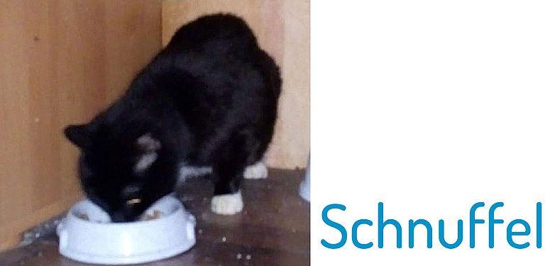 Pflegekatze Schnuffel